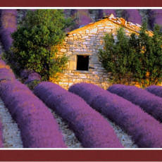 best_of_provence_main